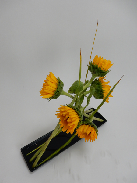 Leaning flower stems in a shallow container