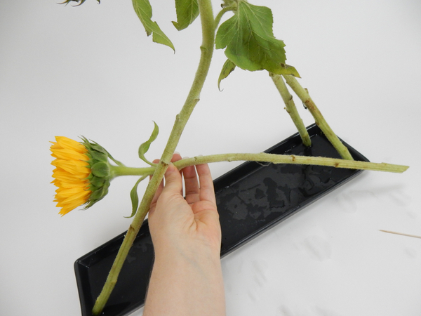 Measure your next flower stem