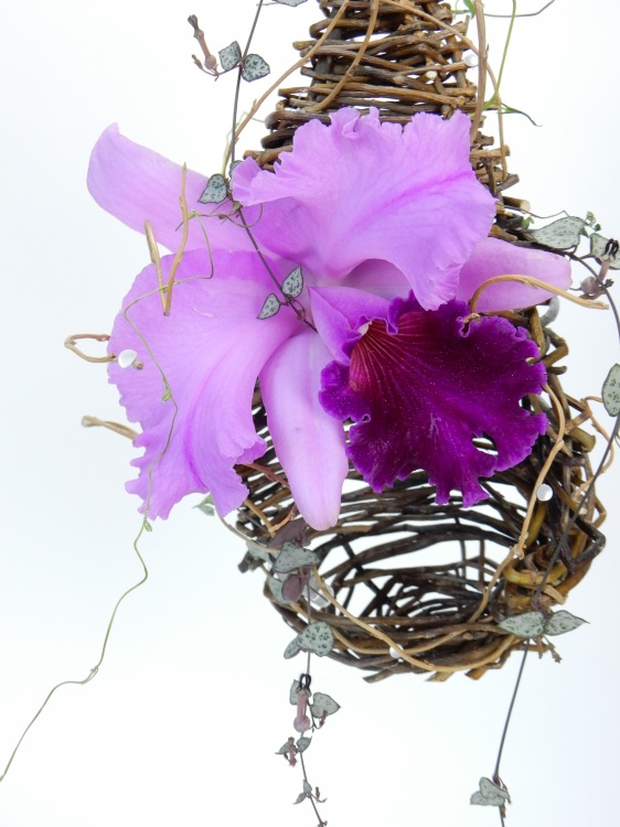 Cattleya orchid and rosary vine