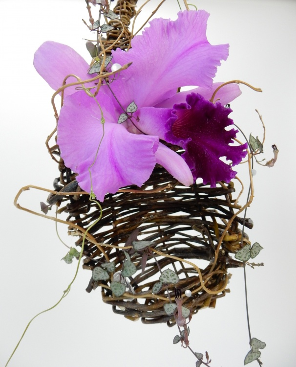 Cattleya orchid and rosary vine in a willow nest