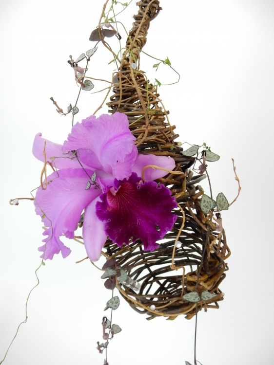 Cattleya orchid in a willow nest