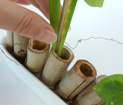 Bamboo frog for a shallow container design