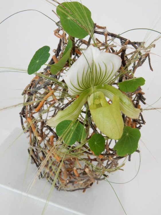 Paphiopedilum orchid on a twig snippet vase armature.