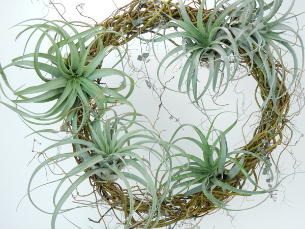 Succulent and Air Plant wreath