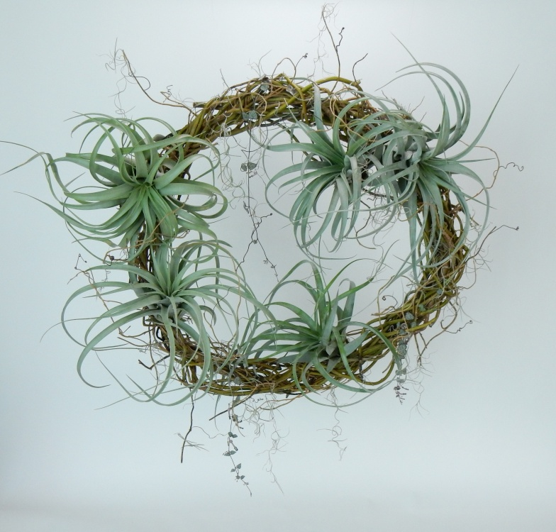 Tillandsia, Spanish moss and rosary vine on a willow wreath