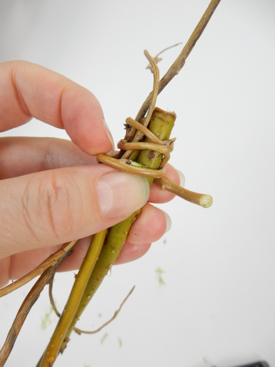 Wrap a thin willow stem around the looped stems