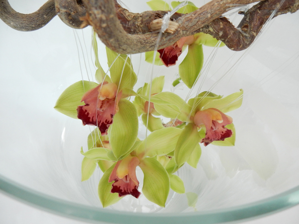 Cymbidium orchids on a hazel stick