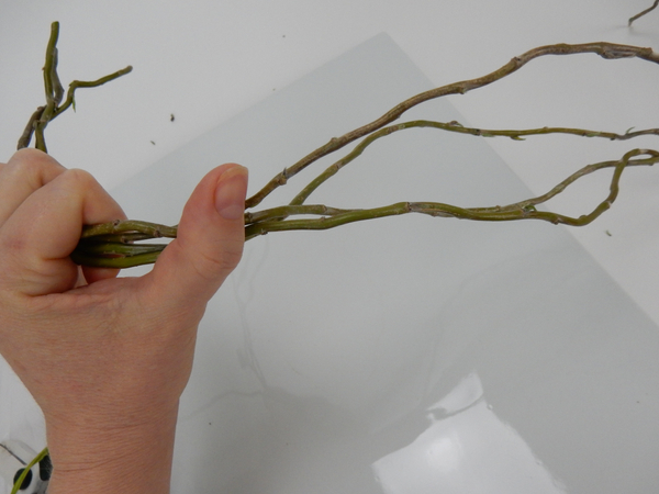 Gather the stems and start to gently manipulate them by bending it down the length of the stem