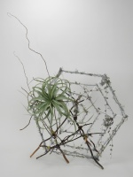 I found it this way: Spiderweb design