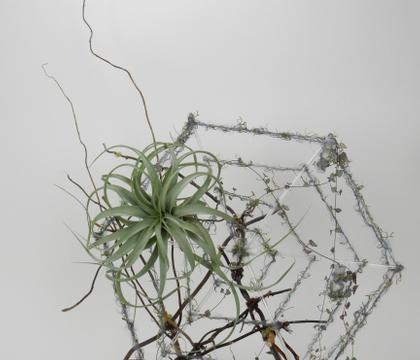 I found it this way: Spiderweb design