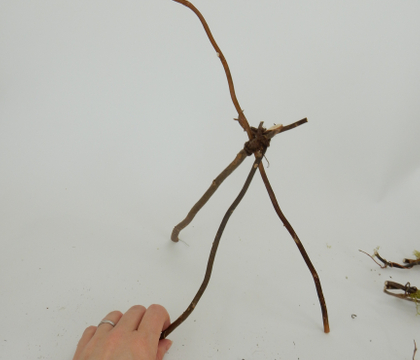 """I found it this way"" demonstration Floral art Structures: Twig Tangles"