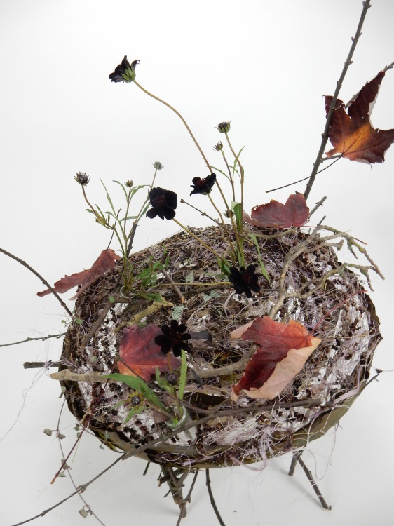 Chocolate cosmos and autumn leaves
