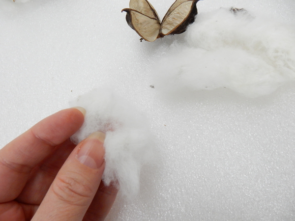Remove the seed and pull the cotton to create a thin piece