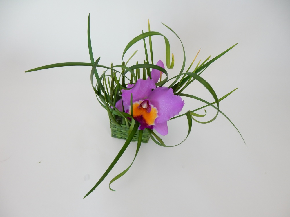 Cattleya orchid and lily grass