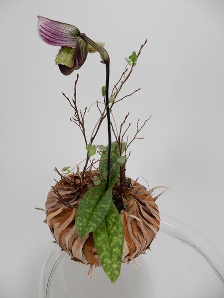 Lady slipper orchid and rosary vine in a bark bowl