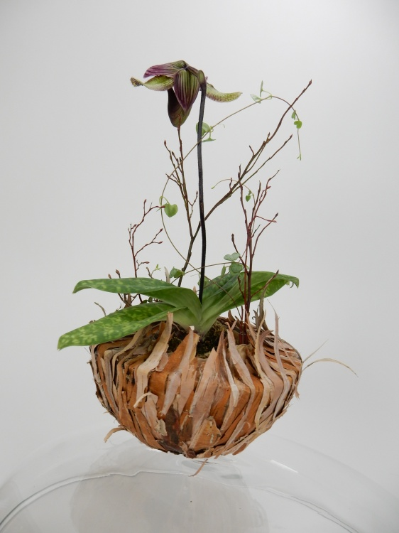 Lady slipper orchid in a bark bowl