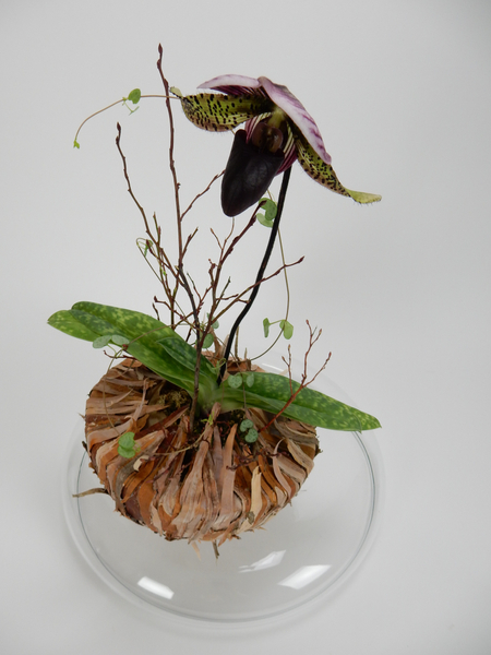 Slipper orchid planted design