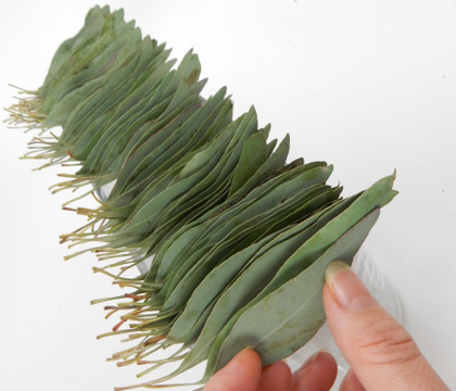Skewered Eucalyptus leaf line-up armature
