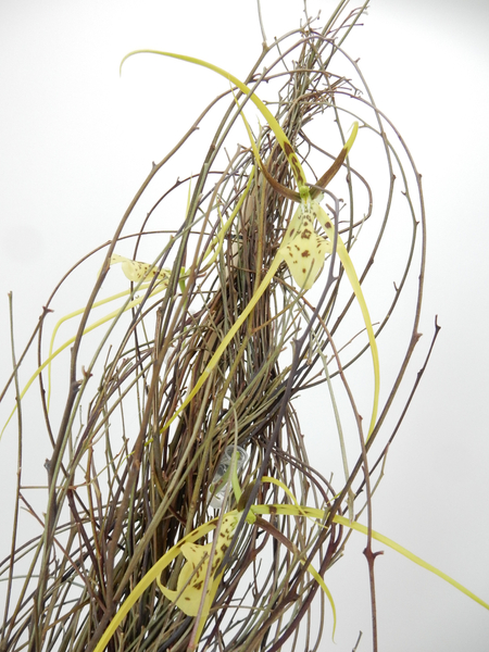Twig braid with Brassia orchids