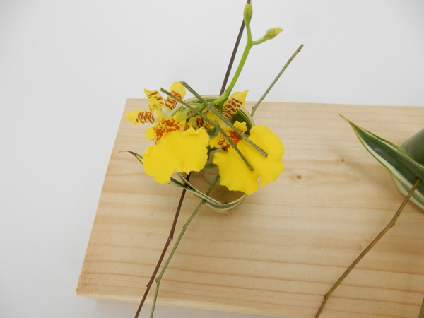 Oncidium orchids in a rolled leaf