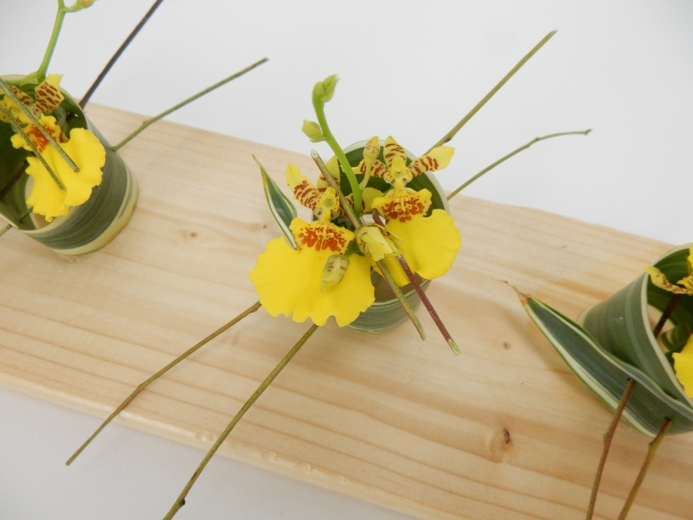 Oncidium orchids in a skewered rolled leaf
