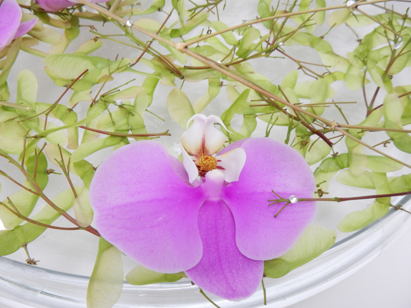 Phalaenopsis orchid and crystals