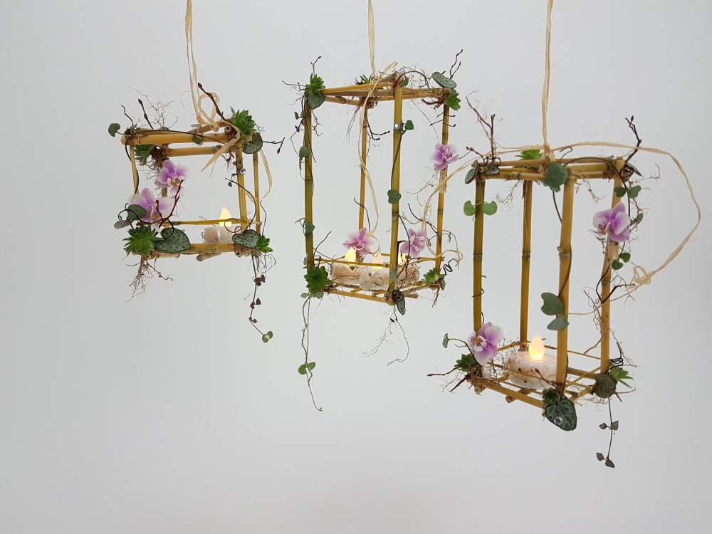Phalaenopsis, Ceropegia woodii and succulent bamboo lanterns