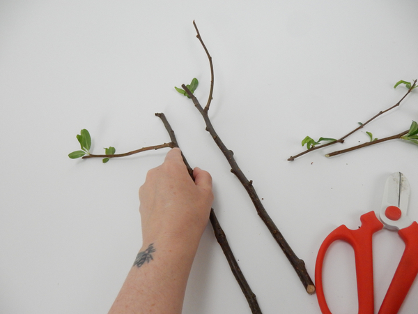 Cut two sprouting stems