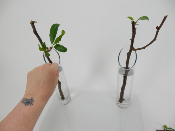 Set the stems in glass vases filled with water