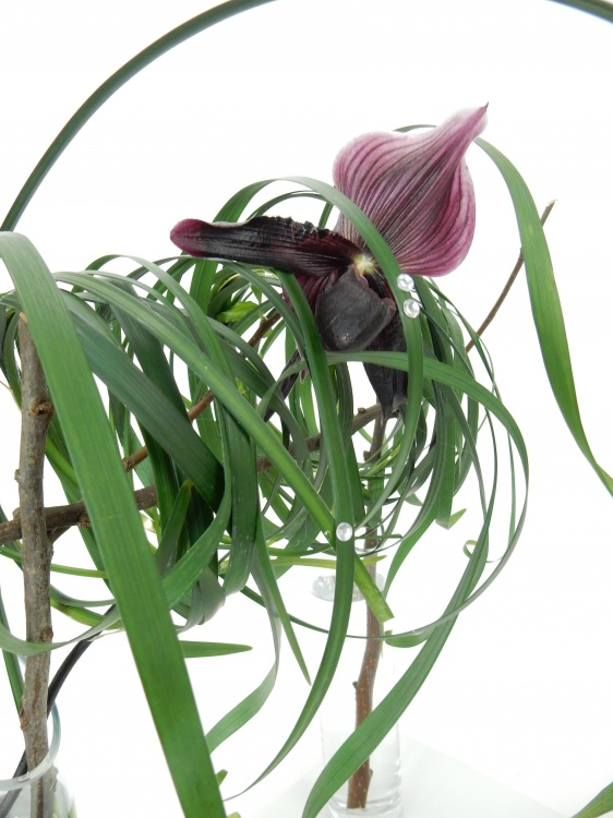Slipper orchid and lily grass