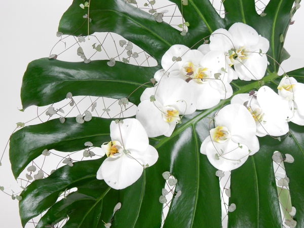 Monstera deliciosa leaf, rosary vine and Phalaenopsis orchids
