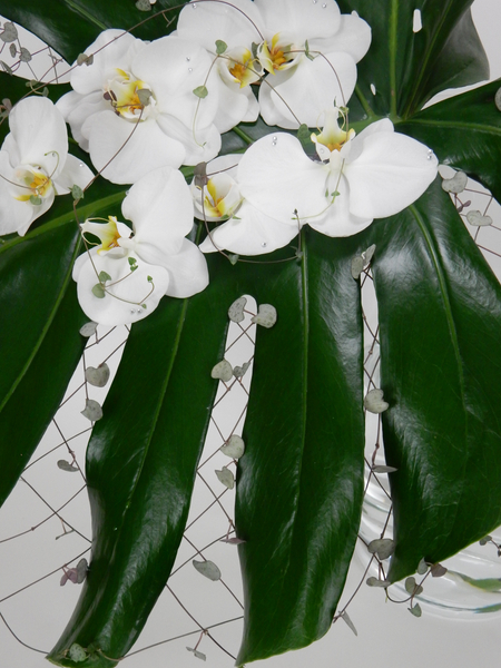 Monstera deliciosa leaf, rosary vine and Phalaenopsis orchids laced up to make the ends meet
