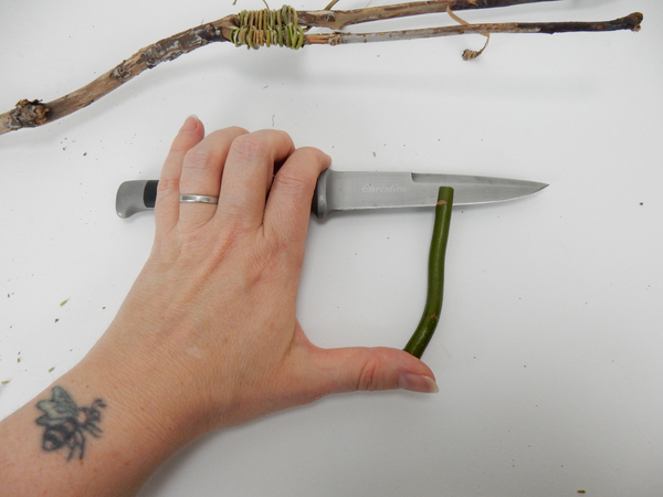 Cut into both ends of a twig with a sharp knife