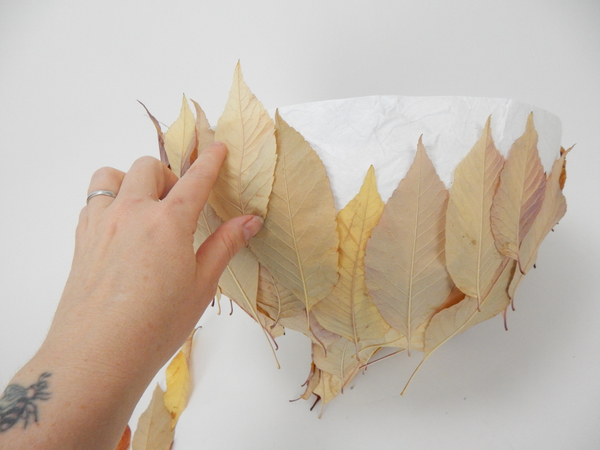 Extend the leaves over the paper rim