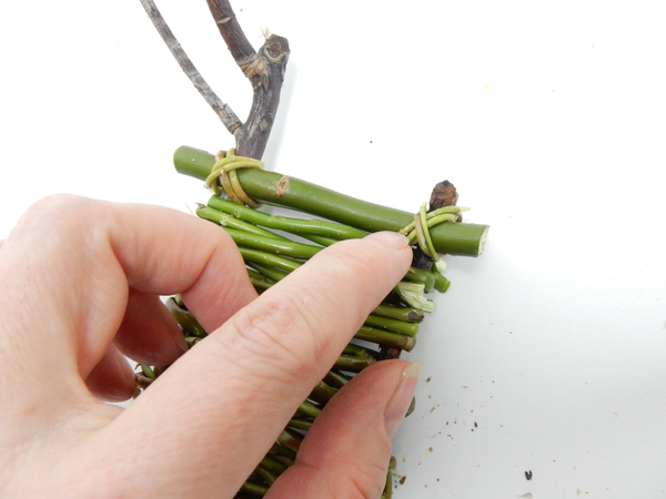 Secure the split twig with a figure eight knot of willow