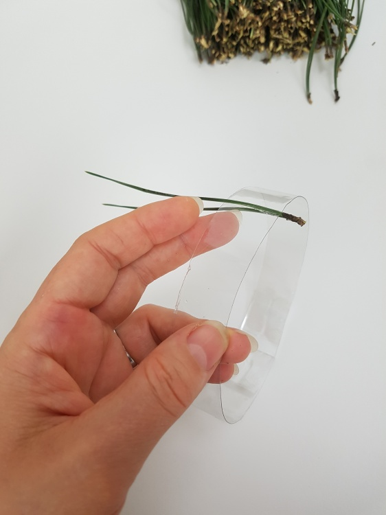 Split a pine needle and glue it to both the inside and outside of the ring