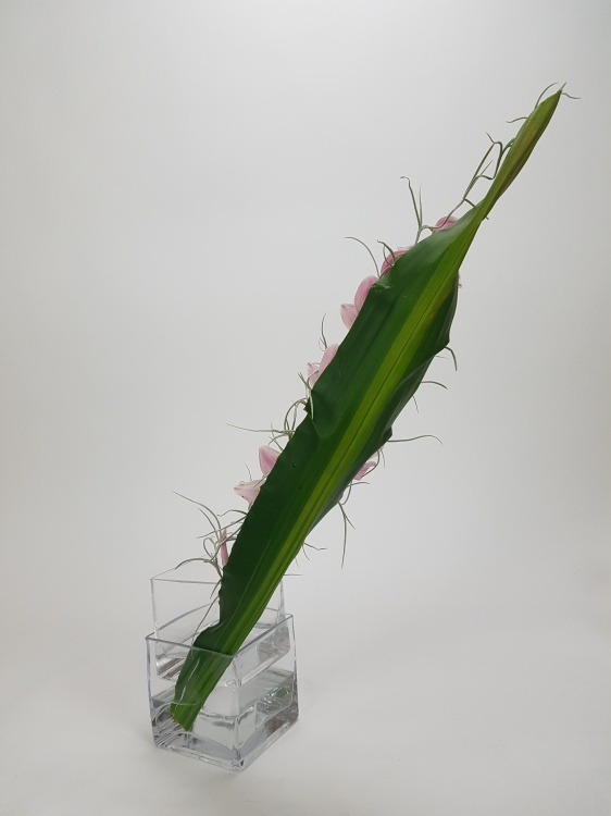 Cordyline armature