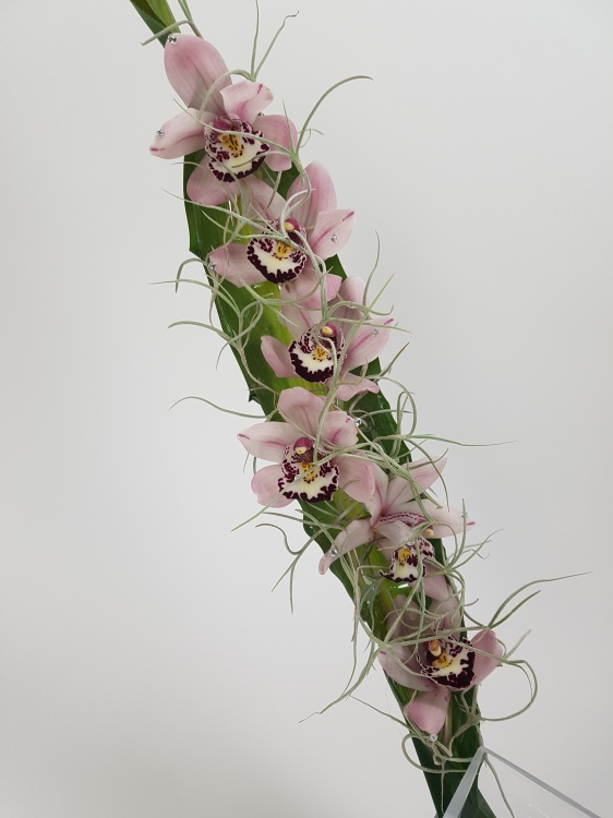 Cymbidium orchids and Spanish moss