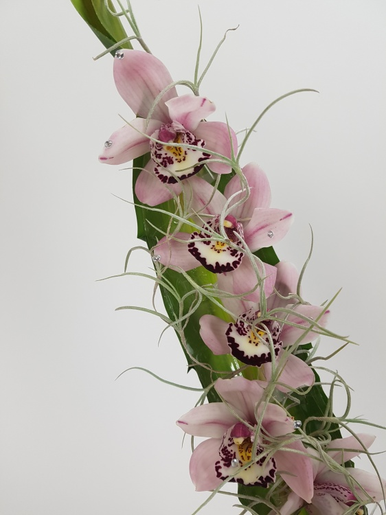 Cymbidium orchids and Tillandsia Usneoides
