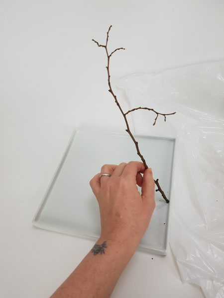 Measure a winter twig to calculate how high you want your design