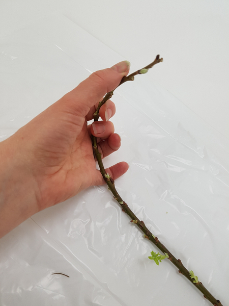 Carefully bend a twig to make it more pliable