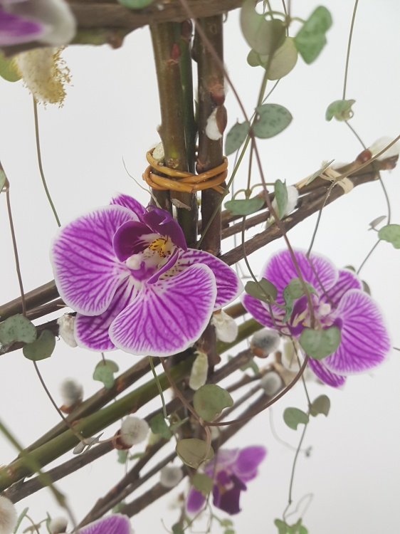 Phalaenopsis, rosary vine and pussy willow armature