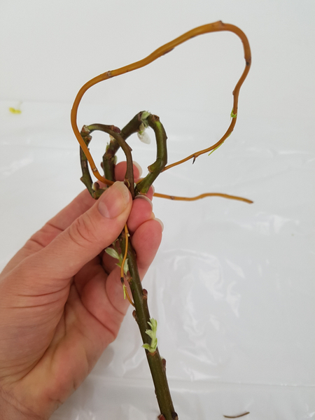 Secure the loops with a willow stem