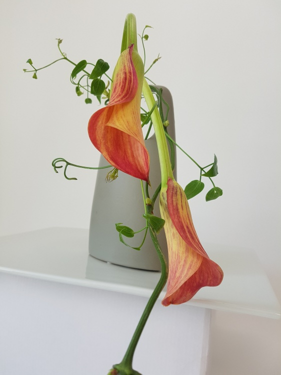 Arum lily floral design.