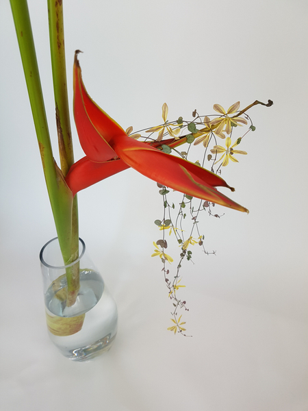 Heliconia, Ceropegia woodii vine and Chrysanthemum