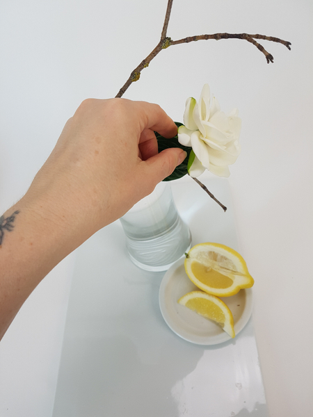Touch your fingers to lemon before handling the gardenia