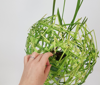 Lily grass and cane bubble for a Pitcher plant