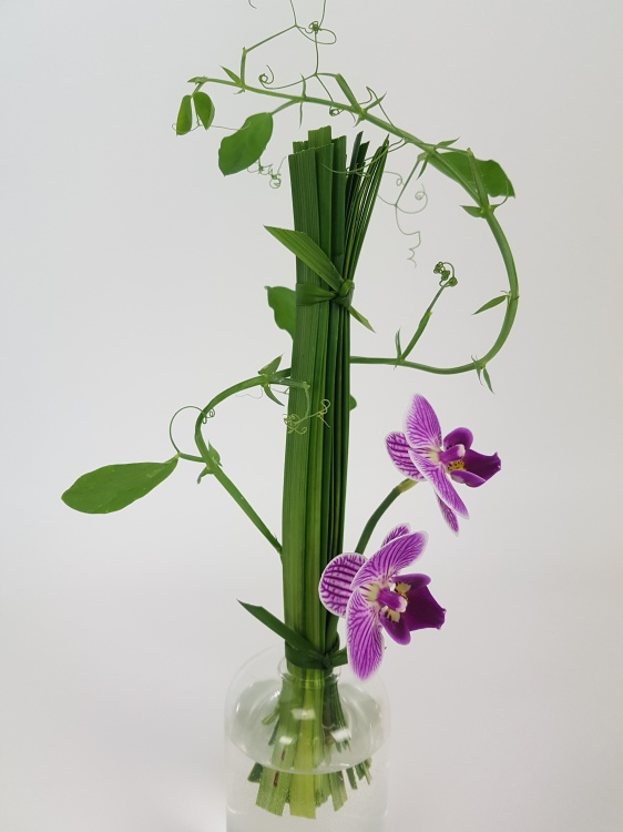 Lily grass, Phalaenopsis and sweet pea vine design