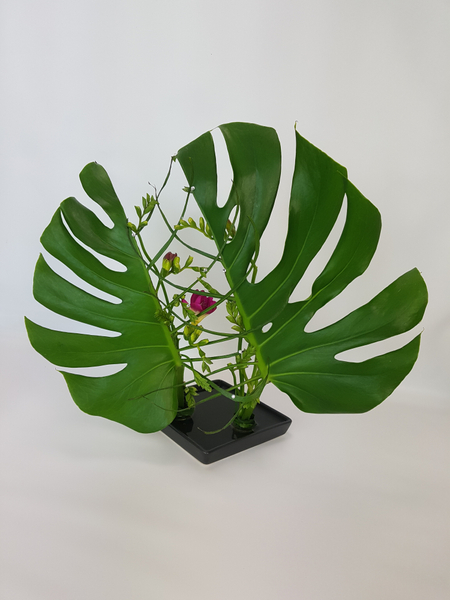 Monstera and freesia flower design