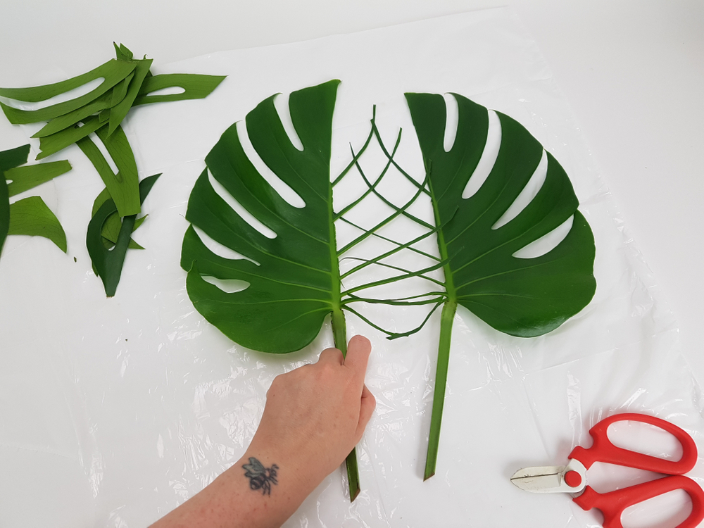 Monstera leaves ready to design with.